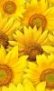 post-522457-143568403708_thumb.png